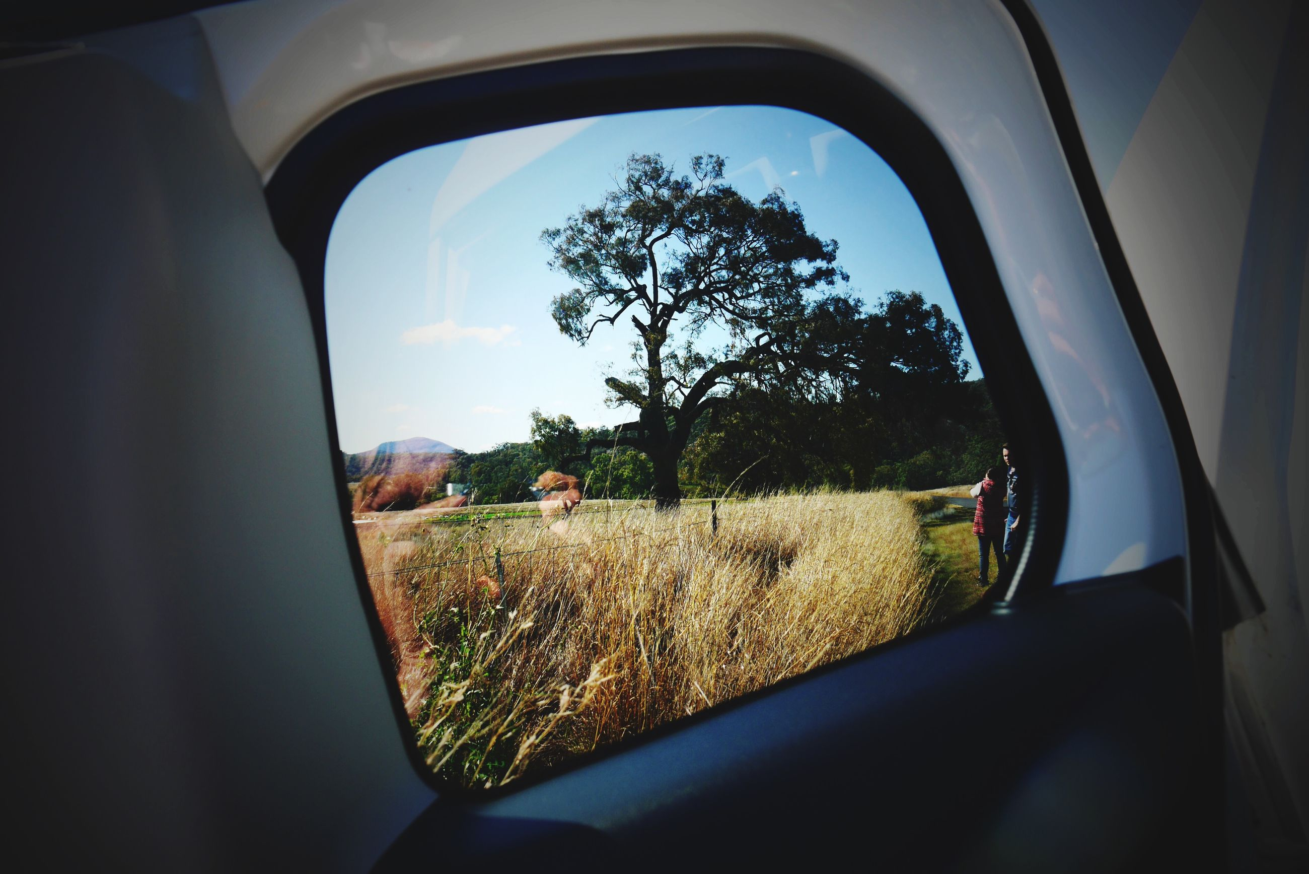transportation, vehicle interior, mode of transport, land vehicle, window, car, tree, glass - material, transparent, side-view mirror, car interior, sky, reflection, landscape, field, windshield, part of, travel, indoors, road