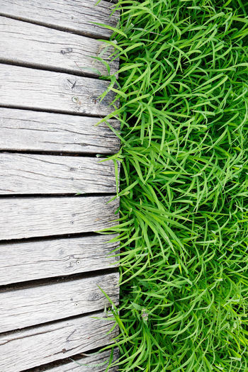 High angle view of plants on wooden table