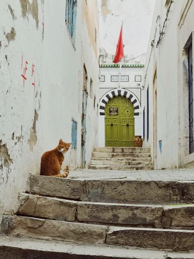Cat on the streets of Tunis Colorful Door Orange Cat Street Cat Tunisia Architecture Built Structure Building Exterior Animal Mammal Animal Themes Feline No People Vertebrate Day Cat One Animal Text Pets Building Staircase Domestic