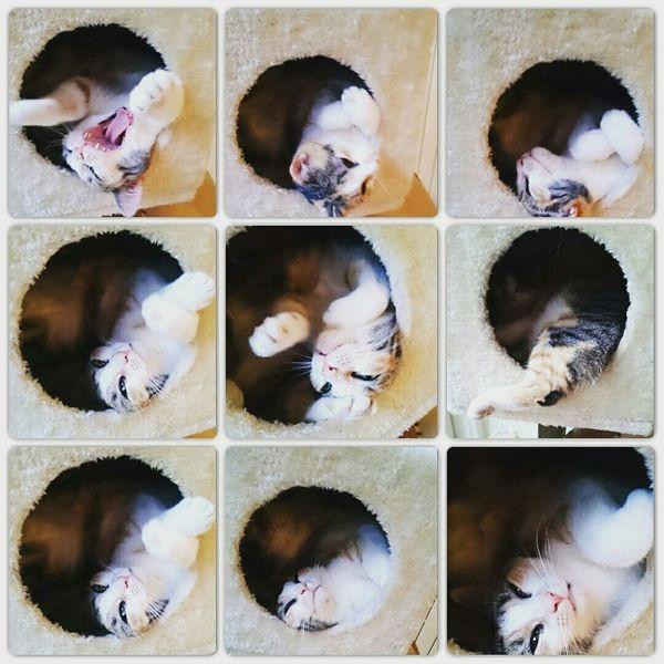Catworld Catmodel  Catoftheday Catdreaming Sweetcat Cat Catstagram Tinker Cat♡ Eyeemcats