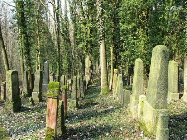 Day Green Color Grief Jewish Cemetary Jewish Cemetery Judenfriedhof Nature No People Outdoors Tombstone Tranquility Tree