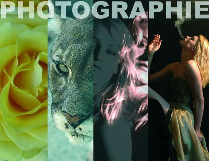 Photography Photo Art