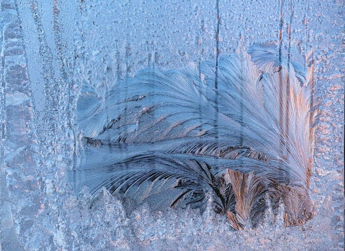 2018 Eisblumen Am Fenster Marz Beauty In Nature Close-up Cold Temperature Day Frosted Glass Gefrorene Fensterscheiben Kristalle Kälte Nature No People Outdoors Plant Snowflake Textured  Tree Winter