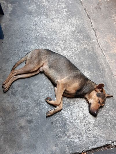 The dog is sleeping on the cement floor Animal Pet Sleep Dog Cement Floor Lying Down Relaxation High Angle View Close-up Sleeping