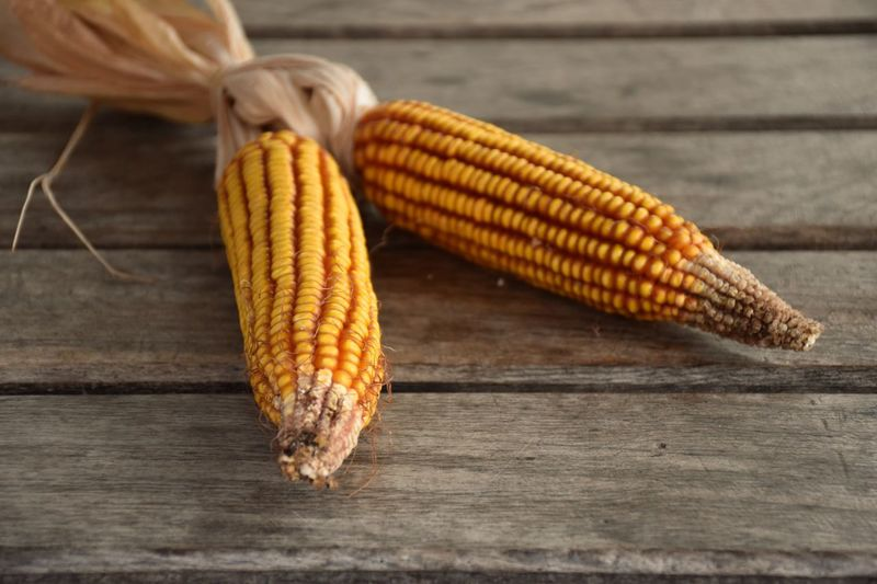 Wooden Autumn colors Autumn Corn Food Vegetable Table Still Life Wood - Material Corn On The Cob Sweetcorn Close-up Yellow High Angle View Autumn Mood