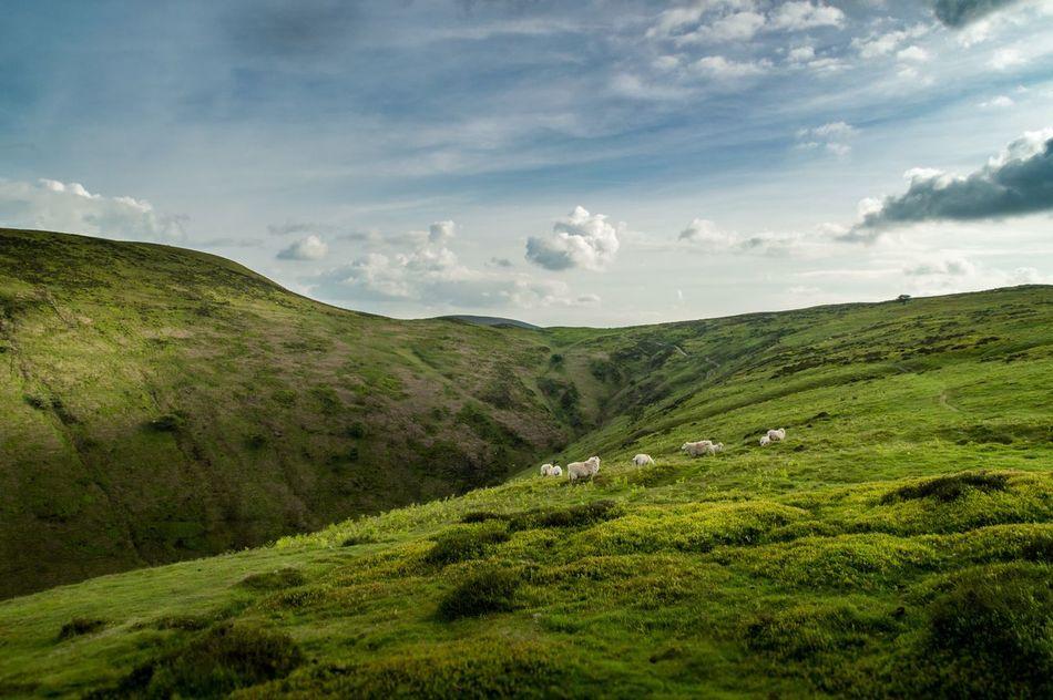 Long Mynd Shropshire Landscape Sky Church Stretton Clouds Sheep Neighborhood Map The Great Outdoors - 2017 EyeEm Awards