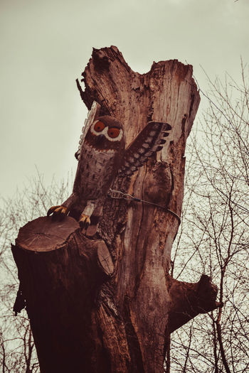 Day Forest Forest Walk Gruffalo Gruffalo Trail Lots Of Leaves Nature No People Outdoors Owl Sculpture Tree Trees Wooden Owl WoodLand