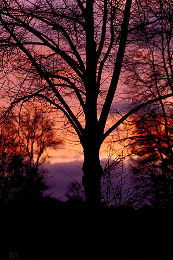 Tree Tree Trunk Bare Tree Silhouette Beauty In Nature Cut Out Scenics Single Tree Sunset Nature Tree Area WoodLand Landscape Outdoors No People