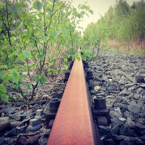 Rust Rusty Old Pete  Rail Railroad Train Track From  Home Town Nieuw_Amsterdam Drenthe To  Germany Woods Iron Metal Architecture Nature Enjoy 420 Bjorngruppen Dutch