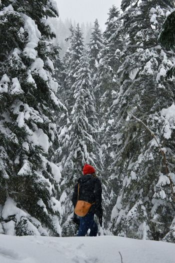Journey on Snowy Trees Evergreen Tree Adventure Exploring Wonderland White PNWonderland Washington State Red Hat Purse Woman Woman Who Inspire You Warm Clothing Tree Snow Cold Temperature Winter Mountain Forest Adventure Hiking Pursuit - Concept Deep Snow