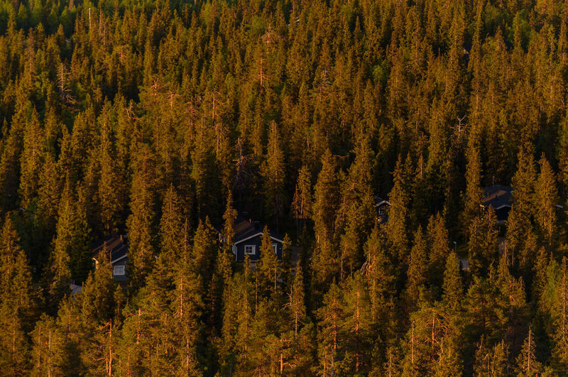 High angle view of trees in forest during the midnight sun in finland.