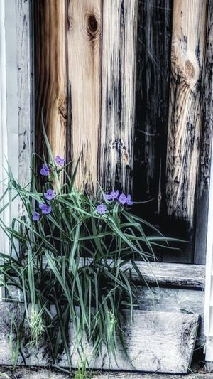 Window Architecture Day Built Structure Building Exterior No People Outdoors Close-up Nature Wildflowers Doorstep Doorway Farmland And Urban EyeEmNewHere