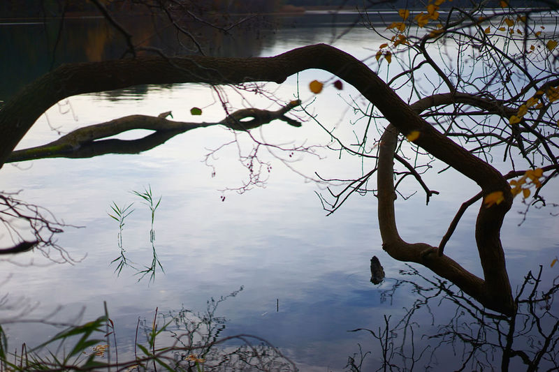 Reflection of tree in water