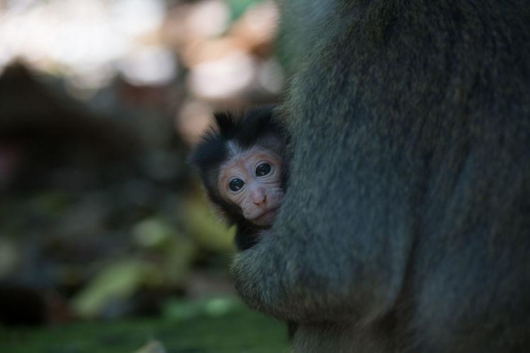 Portrait of monkey