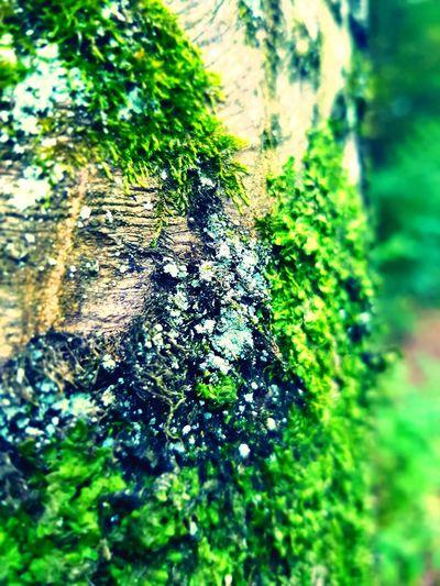 Love nature ❤ Nature Naturepower Naturephotography Naturelover Forest Forest Trees Tree Forestphotography Beauty In Nature EyeEm Best Shots EyeEm Nature Lover EyeEm