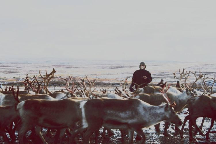Large Group Of Animals Nature One Person Reindeer Cultures Travel Real People Animals In The Wild Circle Travel Photography
