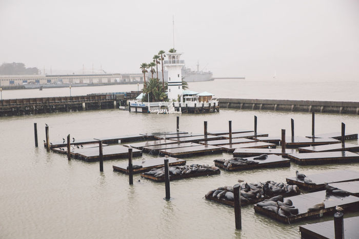 Animals Architecture Built Structure City Cold Day Nature Nautical Vessel No People Outdoors Pier Rainy Day Sea Seal Sky Spring Water Neighborhood Map