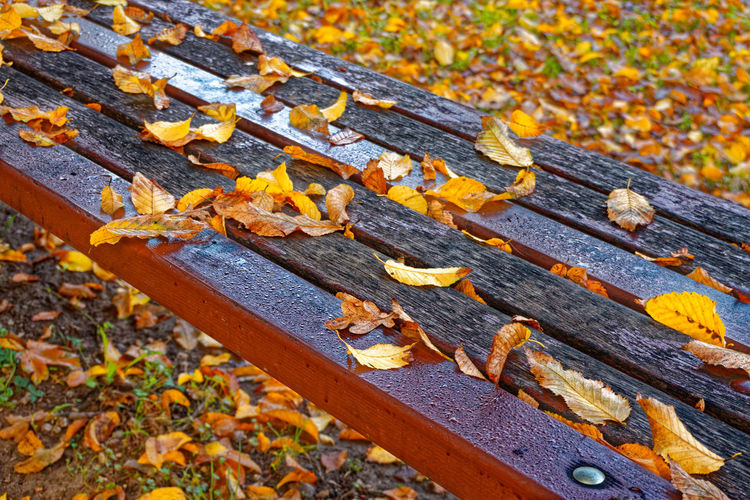 High angle view of dry leaves on wooden bench