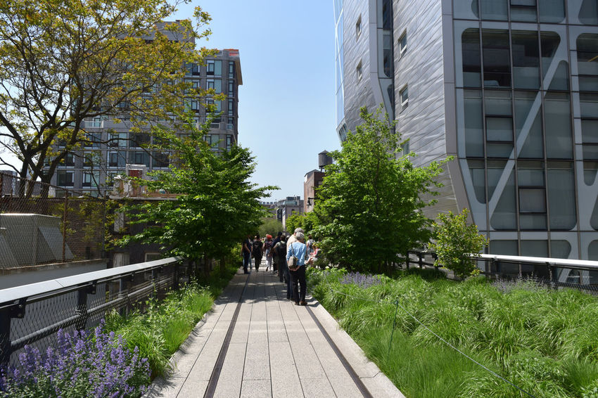 Architecture Chelsea Grass High Line Park Manhattan NY NYC NYC Photography NYC Street NYC Street Photography Outdoors Park Walkway West Village The Street Photographer - 2017 EyeEm Awards