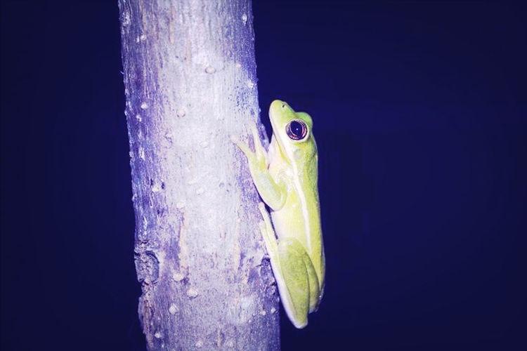 Frog Hangin Around