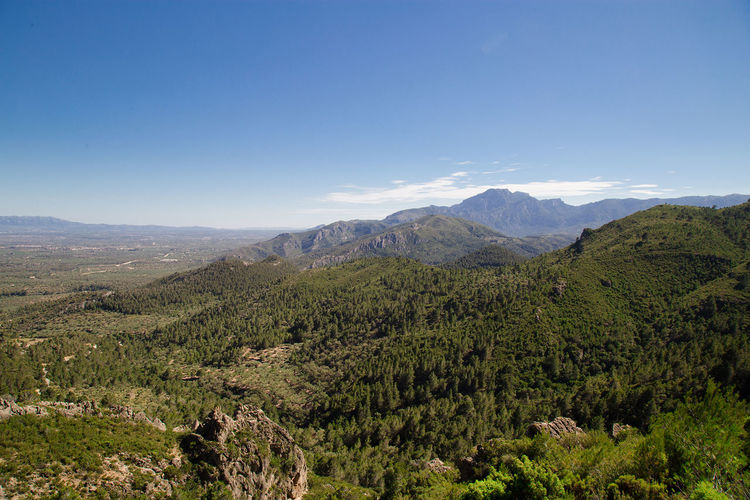 Catalunya Landscape_Collection Mountain View SPAIN Beauty In Nature Blue Sky Cataluña Day Forest Forestphotography Growth Idylic Landscape Mountain Mountain Range Mountains Nature No People Outdoors Rural Scene Scenics Sky Tranquil Scene Tranquility Tree