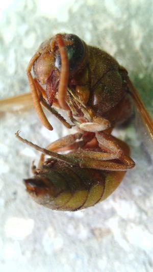 Telefonla cektiğim ölmüş bir arı... First Eyeem Photo