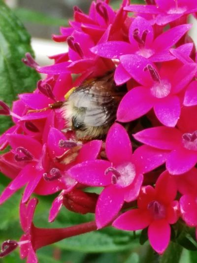 Bee, flower, collor, hide and seek, summer, buzzy, Hanging Out Hello World Enjoying Life Taking Photos