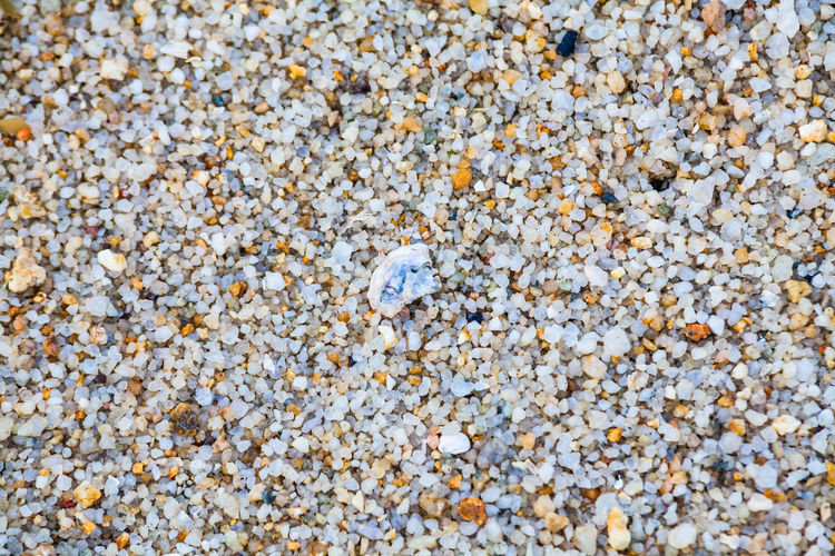 Close up view of hard sand texture for blur background Full Frame Backgrounds No People Textured  Close-up Nature Day Outdoors Land Animal Wildlife Shell Sand Beach Animal Animal Shell Seashell High Angle View Solid Beauty In Nature Animal Themes Animals In The Wild Pebble Marine