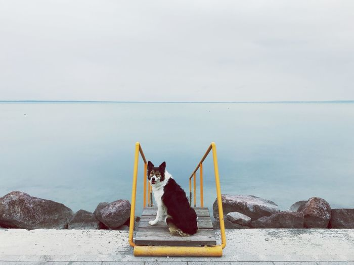 Dog on staircase at sea against sky
