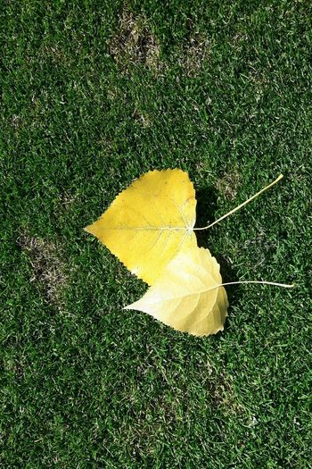 Leaf Yellow Autumn Change High Angle View Grass Close-up Green Color