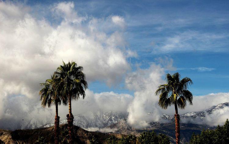 Mountain Peak Tree Area Uniqueness, Tree Sky Outdoors Beauty In Nature Landscape Natural Parkland Palm Desert, CA Mt. San Jacinto State Park Mountain Range