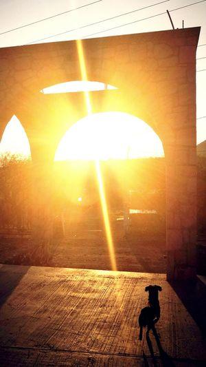 Elküzo Silhouette Sunlight Outdoors