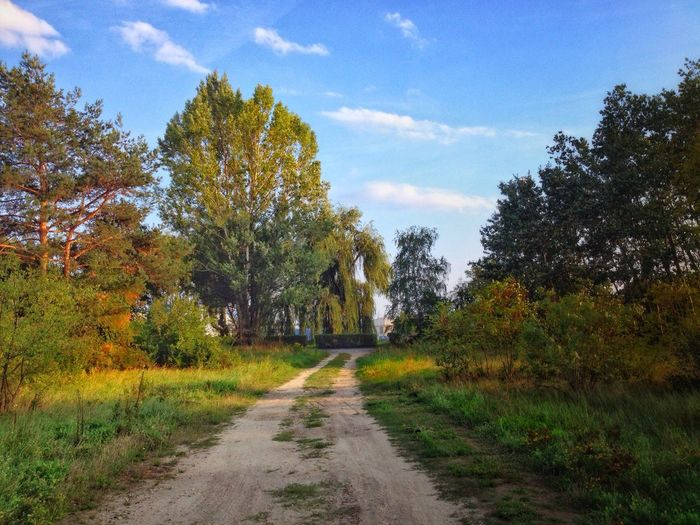 Landscape Plant Tree Growth Sky Direction The Way Forward Nature Beauty In Nature Tranquility No People Road Scenics - Nature Tranquil Scene Cloud - Sky Footpath