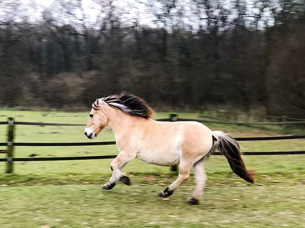 Horse Animal Themes No People Outdoors Nature Forest Domestic Animals Pferd Laufen Running Horses Running Horse
