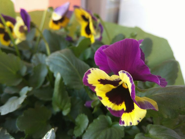 Flowers Nature Focus On Foreground Selective Focus Nexus6 Plant Potted Plant
