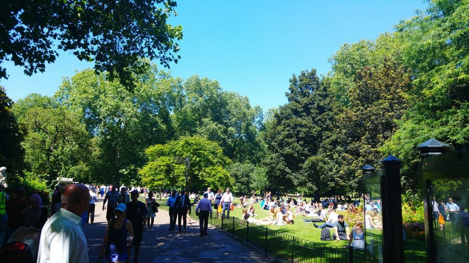 People In The Park Hot Summer Afternoon St James Park London  Summer 2016 Tree Shadows Bright Sunny Day