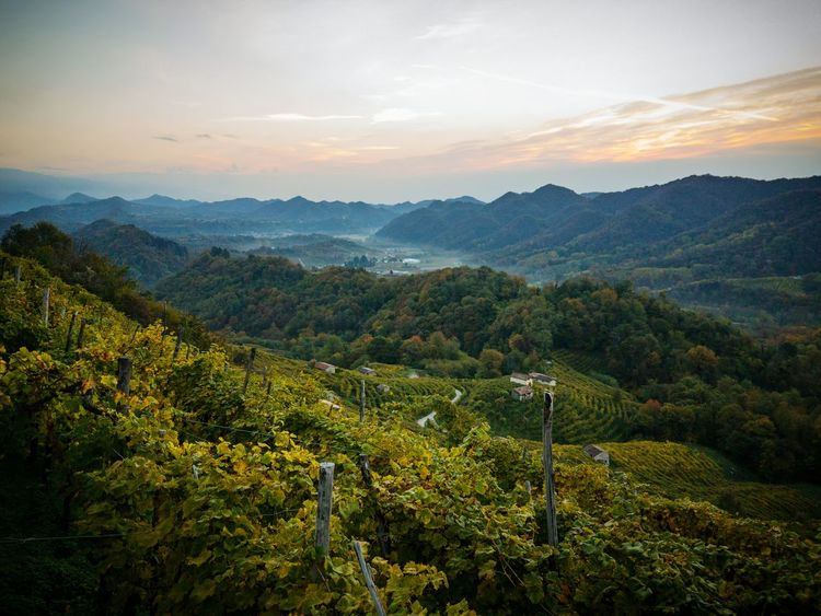 Nature Landscape Beauty In Nature Agriculture Tree Mountain Rural Scene Cloud - Sky Outdoors Field Growth Sunbeam Scenics Mountain Range Autumn Social Issues Prosecco Land Veneto Italy Beauty Proseccosuperiore Sunrise