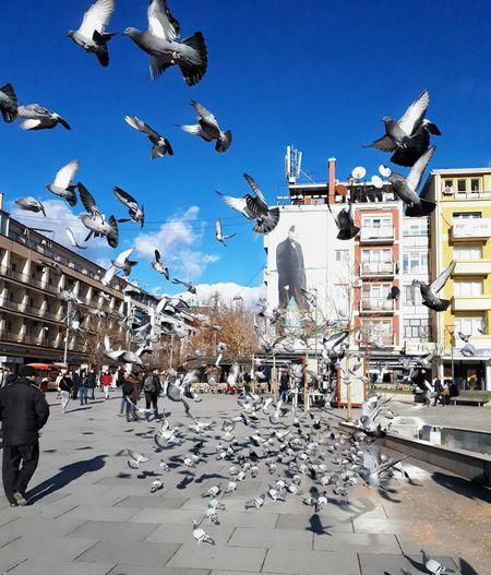 Flock of birds flying over street in city