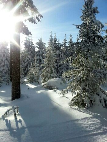 The Purist (no Edit, No Filter) TheMinimals (less Edit Juxt Photography) Landscape_Collection Snow Trees Sunshine! Winter Trees Winter Landscape Cold Winter ❄⛄