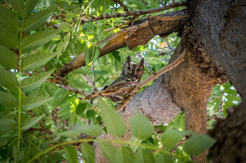 Owl in a tree Owl Plant Tree Growth Plant Part Nature Leaf Trunk Green Color Beauty In Nature Day Branch Low Angle View Animals In The Wild