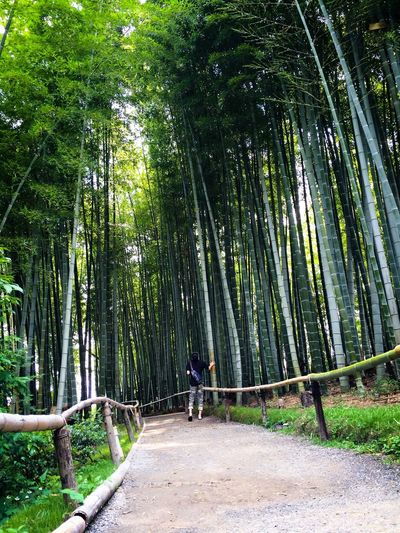 Bamboo Forest in Kyoto, Japan. Bamboo Bamboo Forest Kyoto Japan Nature IPhoneography Path Awesome Scale  Peaceful