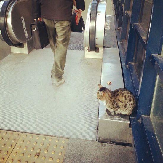 Metro Kedisi