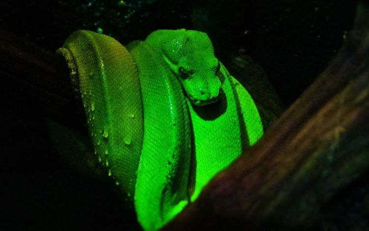 Snake Snakes Beautiful Reptile Reptile Reptiles Green Parseltongue Slytherin Reptile!!  Beautiful Snake Colour Of Life