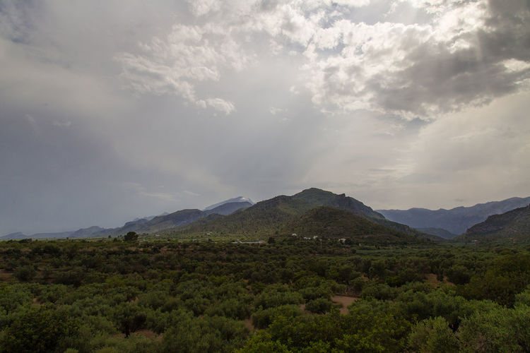 Catalonia Catalunya Cloudy Day Olive Tree Rural SPAIN Beauty In Nature Clouds Day Landscape Mountain Mountain Range Mountains Mountains And Sky Nature No People Olive Trees Outdoors Rural Scene Scenery Scenics Sky Tranquil Scene Tranquility Tree