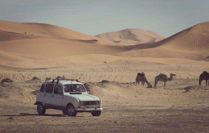 Sahara de