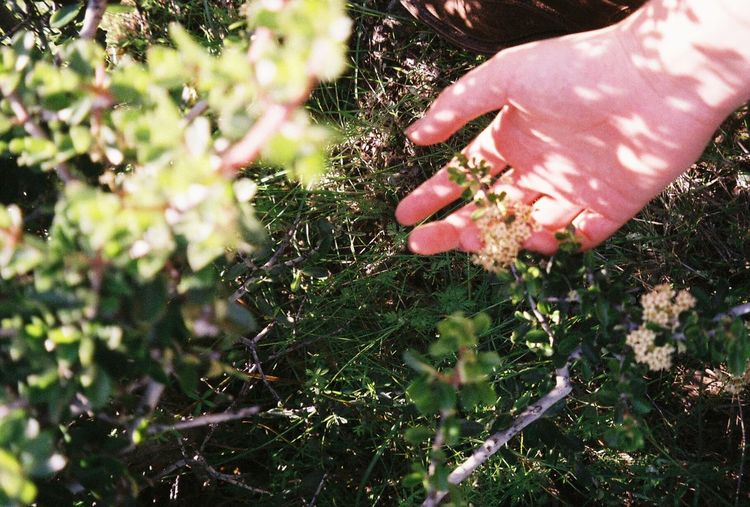 Human Hand Hanging Out 35mm Nature Outdoors Freshness Film Photography Close-up Film Pentax K1000 Shadow Beauty In Nature Unedited One Person Me