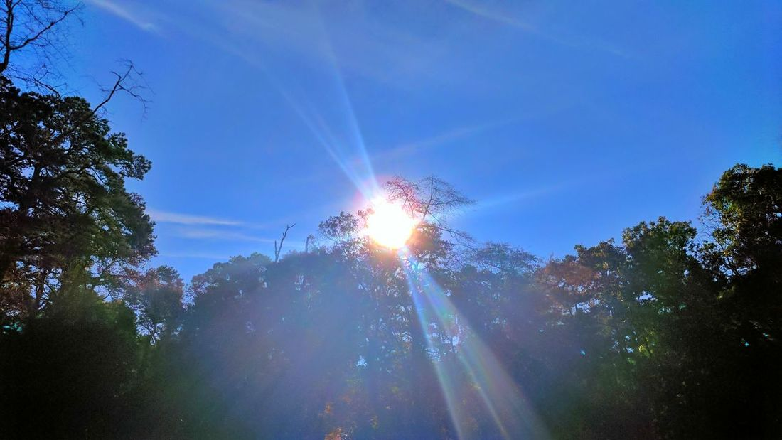 Nice, crisp, Jersey morning air. Tree Sky Low Angle View Blue Nature No People Outdoors Beauty In Nature Illuminated Day