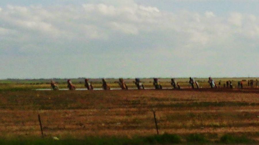 Cadillac Ranch in Amarillo, Texas ,U.S.A. Cadillacs Amarillo Texas Cadillac Ranch Boots N Jeans Gal💝 Just Be Me 💎💙💎 Hello World Texas Panhandle Setting EyeEm EyeEm Best Shots EyeEmNewHere Eye4photography  Cowgirl Fresh Still Shot Sky Grass