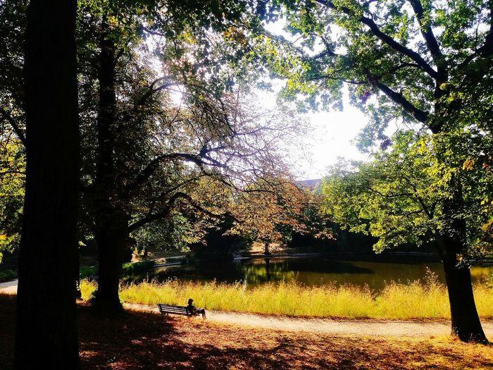 Autumn scene of