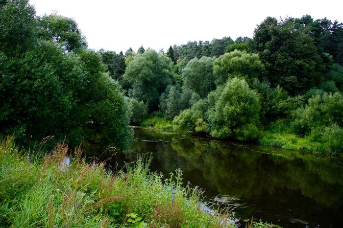 Beauty In Nature Dubrovitsi Forest Grass Green Green Color Growing Growth Idyllic Landscape Lush Foliage Nature No People Outdoors Plant Remote Riverside Russia Scenics Tranquil Scene Tranquility Tree Water Colour Of Life Color Palette